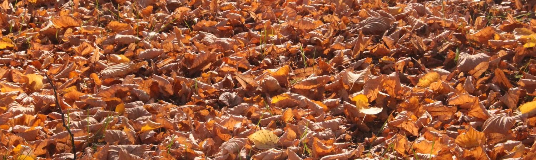 Herbst-Laub-1